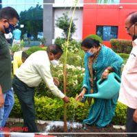 Tree plantation (4)